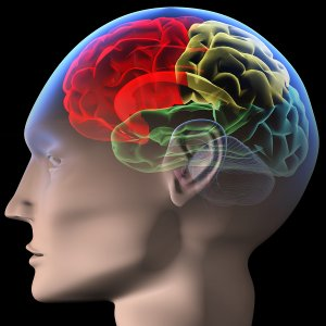 Neuro Linguistic Programming Training
